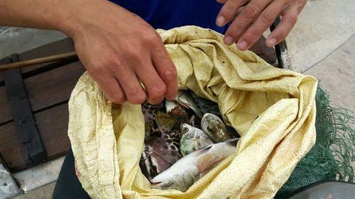 Người dân lo sợ KCN sẽ làm ô nhiễm môi trường, tôm cá không còn