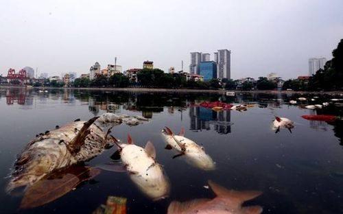 Hồ điều hòa không khí và cảnh quan nội đô Hà Nội bị ô nhiễm nặng (Trong ảnh cá chết nổi trắng hồ Ngọc Khánh)