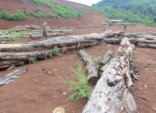 Gỗ rừng đã được khai thác