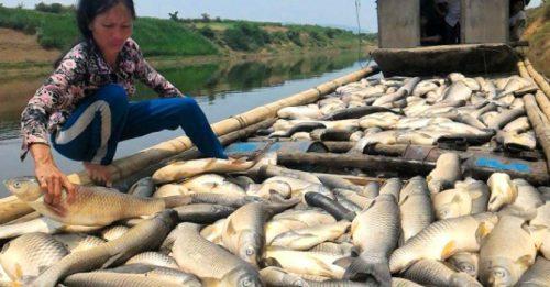 Cá chết hàng loạt ở sông Bưởi do việc xả thải chưa qua xử lý của nhà máy Mía đường Hòa Bình (Ảnh: TL)