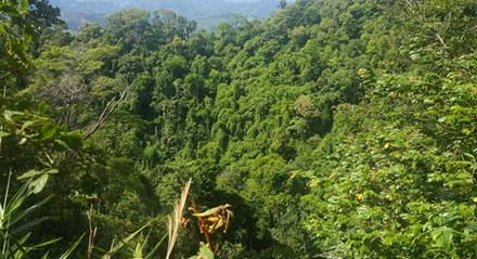 Rừng tự nhiên thuộc lâm phần của Ban Quản lý rừng phòng hộ lưu vực sông Bến Hải rộng gần 10.000 hecta, chủ yếu là rừng tự nhiên thuộc địa bàn huyện Vĩnh Linh ( Ảnh: Hưng Thơ)
