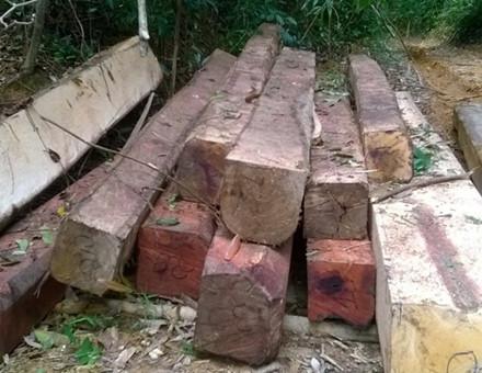 Một bãi tập kết gỗ trên đường Lò Than để đợi xe ba cầu đến chở.  (Ảnh: Hưng Thơ)