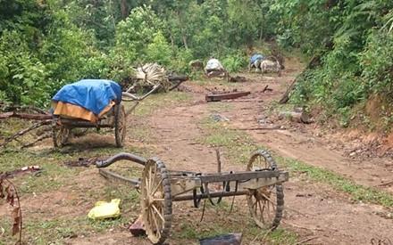 Dọc con đường Lò Than khoảng 10km, có rất nhiều đoàn xe trâu đợi chở gỗ (Ảnh: Đăng Khoa)