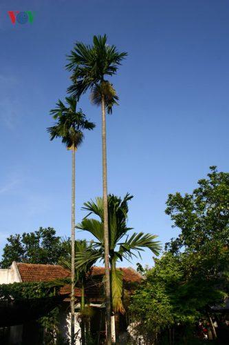 Hình ảnh không gian làng quê truyền thống với ngôi nhà mái ngói và vườn cây xanh.