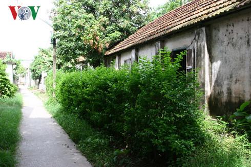 Hàng rào xanh ở thôn quê