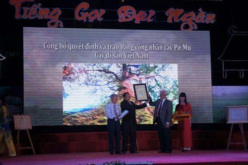 Chính quyền và nhân dân Tây Giang vinh dự đón Bằng công nhận 725 cây pơmu là Cây Di sản Việt Nam. Ảnh: Ngọc Phó