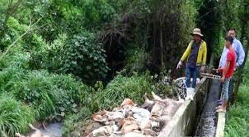 Công ty Đài Loan vứt heo chết ra thượng nguồn sông Sài Gòn (Ảnh: VTC News)