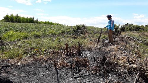 Nhiều diện tích đất rừng phòng hộ ở Gia Lai bị người dân chiếm làm rẫy. (Ảnh: Hoàng Thanh)