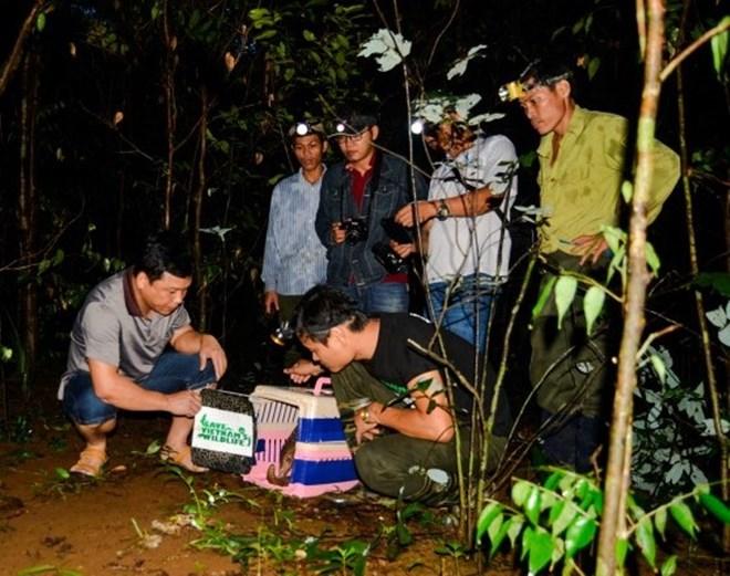 Thêm 33 cá thể tê tê Java quý hiếm được tái thả về môi trường tự nhiên