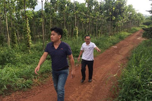 Đường nội bộ trong trang trại của ông Sơn.