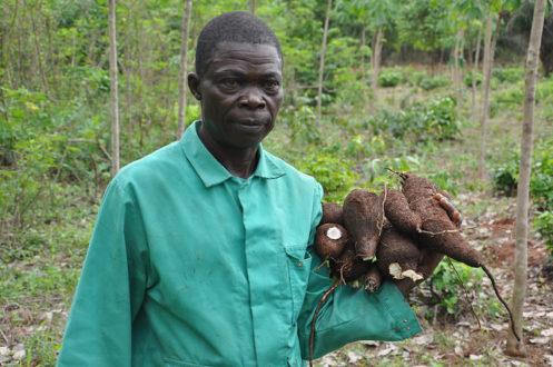Một nông dân cùng nông sản thu hoạch từ trang trại cao su nông lâm của ông tại Nigeria. (Ảnh: Trung tâm Nông lâm Thế giới)