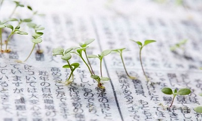 Những mầm cây mọc lên từ giấy báo của Nhật Bản.