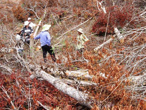 Rừng bị tàn phá nặng nề ở xã Phú Mỡ, huyện Đồng Xuân, tỉnh Phú Yên