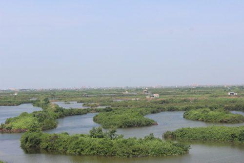 Mô hình nuôi ngao quảng canh tại VQG Xuân Thủy giúp người dân ổn định đời sống.