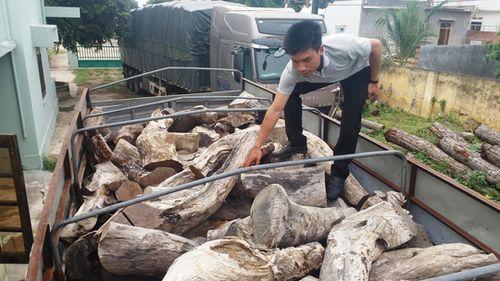 Xe chở gỗ quý bị tạm giữ tại Hạt Kiểm lâm thị xã Ayun Pa (tỉnh Gia Lai)