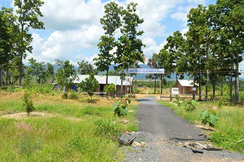 Phần lớn diện tích rừng của tỉnh Đắk Lắk giao cho Công ty Hoàng Nguyễn ở huyện Ea H'leo bị tàn phá (Ảnh: Cao Nguyên)
