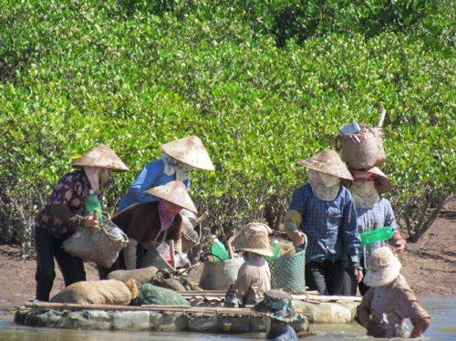 Phụ nữ tại các xã vùng đệm khai thác thủy sản thủ công tại VQG Xuân Thủy