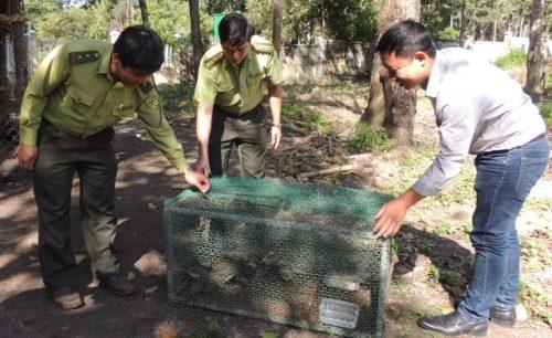 11 cá thể động vật hoang dã sẽ được chăm sóc để thả lại vào rừng.