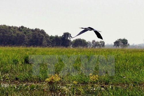 Một góc Vườn quốc gia Tràm Chim. (Nguồn: TTXVN)