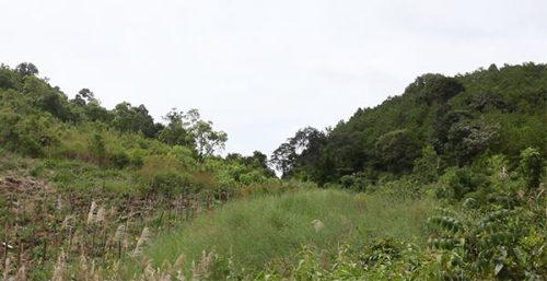 Rừng thiêng của dân làng Ka Bay, bên cạnh những ngọn đồi trơ trọi xung quanh (Ảnh Hoàng Hường)