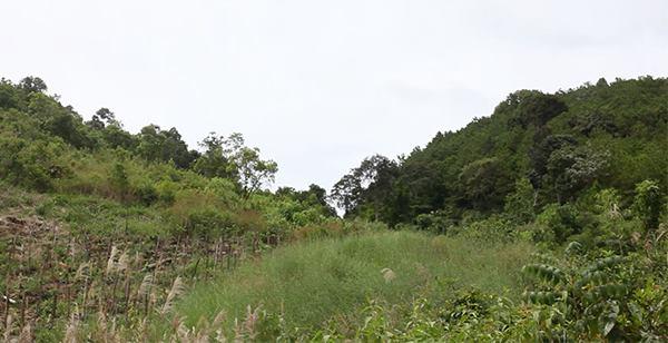 """""""Luật rừng"""" trên dãy Trường Sơn"""