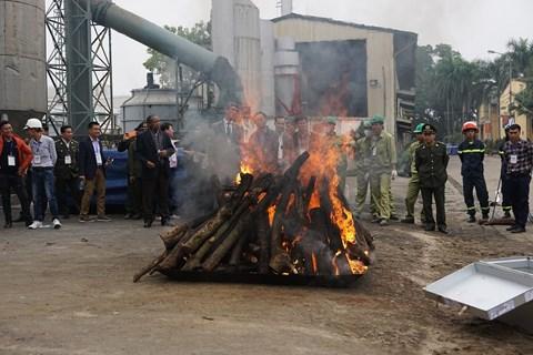 Việt Nam tổ chức tiêu hủy ngà voi và sừng tê giác bất hợp pháp