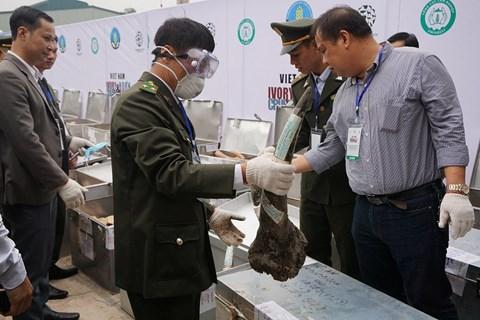 Cơ quan liên ngành kiểm tra tang vật ngà voi, sừng tê giác trước khi đốt và nghiền nát