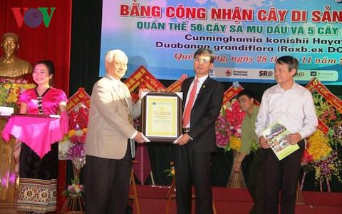 Đại diện Hội Bảo vệ thiên nhiên và môi trường Việt Nam trao bằng công nhận Cây di sản Việt Nam cho quần thể 56 cây sa mu dầu và 5 cây phay sừng cho đại diện Khu bảo tồn thiên nhiên Pù Hoạt.