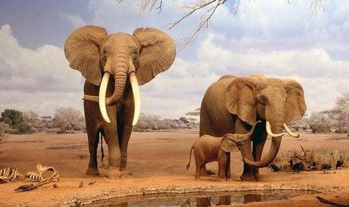 Cứu động vật hoang dã bằng tai mắt nhân dân