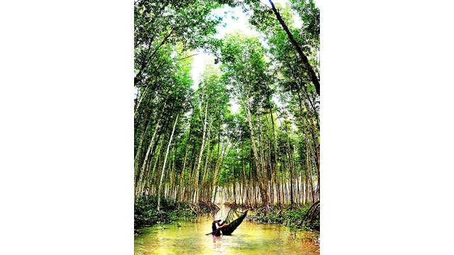 Ngoài lâm sản, hộ dân nhận khoán đất rừng ở Cà Mau có thêm nguồn thu kết hợp dưới tán rừng ngập mặn.