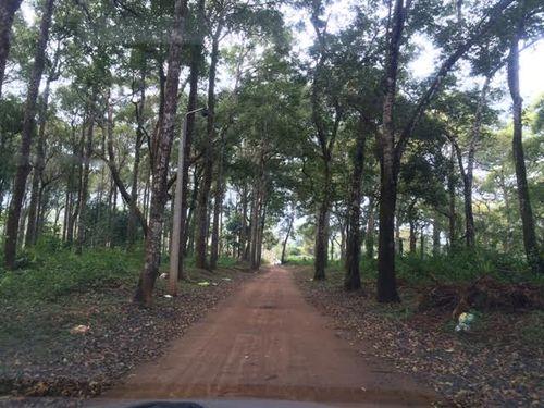 Con đường bê tông công y Mêhycô mở trái phép xuyên qua rừng phòng hộ cảnh quan TP. Buôn Ma Thuột để vào khu du lịch