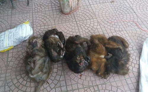 Bắt hai đối tượng vận chuyển 7 cá thể khỉ mặt đỏ quý hiếm đi tiêu thụ