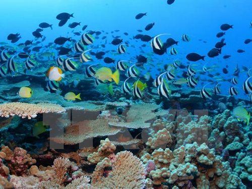 COP-13 thông qua tuyên bố chung về bảo tồn đa dạng sinh học