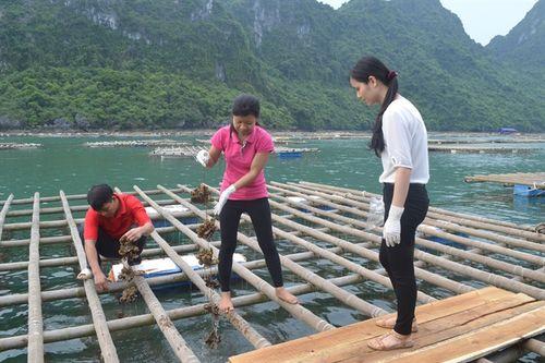 Nuôi trồng và khai thác thủy sản là thế mạnh của tỉnh Quảng Ninh