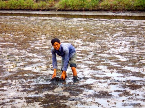 Vấn đề ô nhiễm môi trường nước vùng nuôi trồng thủy sản ngày càng trở nên bức xúc