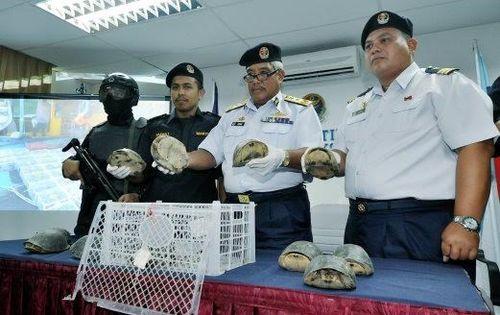 Malaysia bắt giữ vụ buôn lậu 1.400 con rùa sang Việt Nam