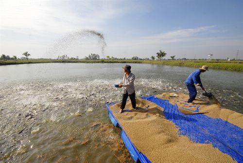 Bảo vệ môi trường để phát triển nghề nuôi cá tra