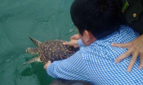 Chủ nhà hàng trả cá đồi mồi quý hiếm về với tự nhiên