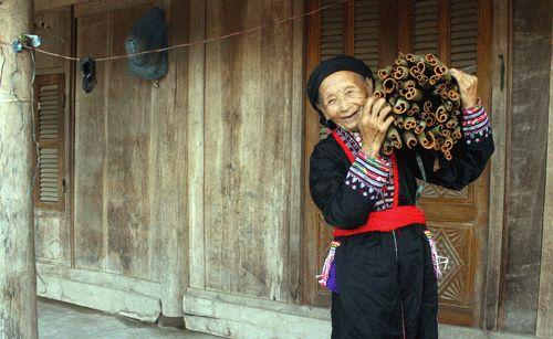 Nhờ cây quế dân Nậm Đét thu tiền tỷ từ rừng