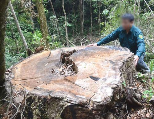 """""""Chảy máu"""" gỗ quý ở Khu bảo tồn thiên nhiên Nam Nung"""