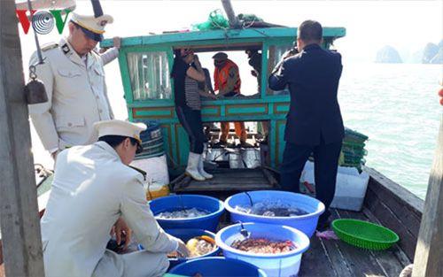 Xử phạt 6 phương tiện khai thác thủy sản trên Vịnh Hạ Long