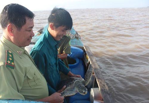 Con vích nặng 7 kg được thả về với biển thiên nhiên