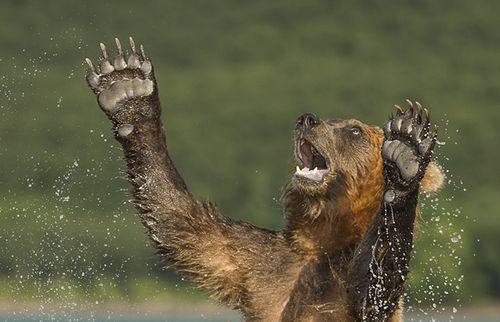 Hình ảnh chọn lọc về vẻ đẹp thiên nhiên hoang dã nước Nga