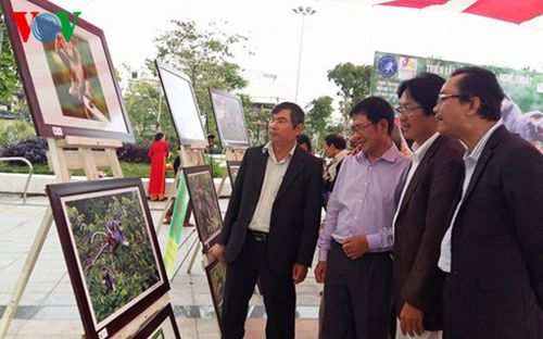 Đà Nẵng triển lãm ảnh về Vọoc chà vá chân nâu