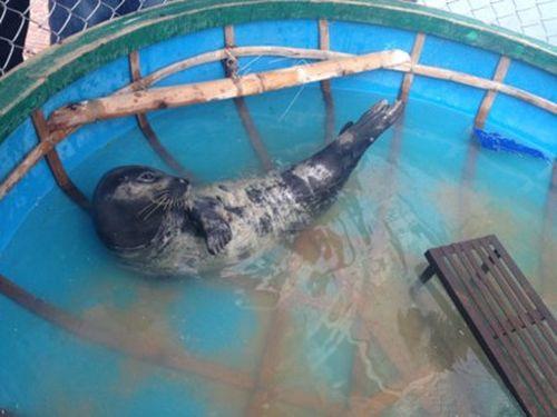 Quảng Nam: Khen thưởng gia đình cứu sống, bảo vệ và giao trả cá thể Hải Cẩu bắt được trên biển