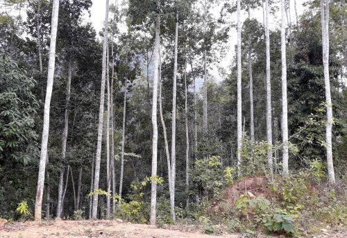 Hơn 200 ha rừng trồng ở xã Côn Minh không thể khai thác vì bị quy hoạch vào khu bảo tồn