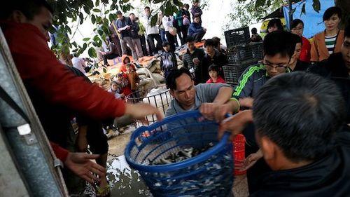 Kiểm tra việc phóng sinh hàng tấn cá ngoại lai có hại xuống sông Hồng