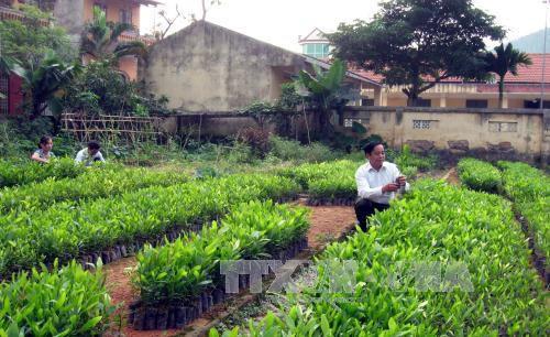 Tuyên Quang điều chỉnh quy hoạch 3 loại rừng