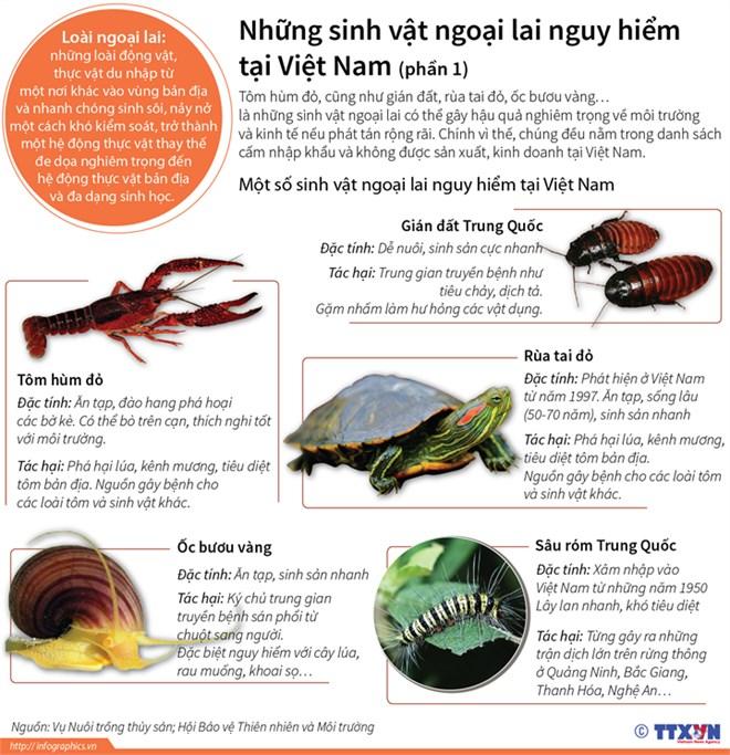 Những sinh vật ngoại lai nguy hiểm tại Việt Nam