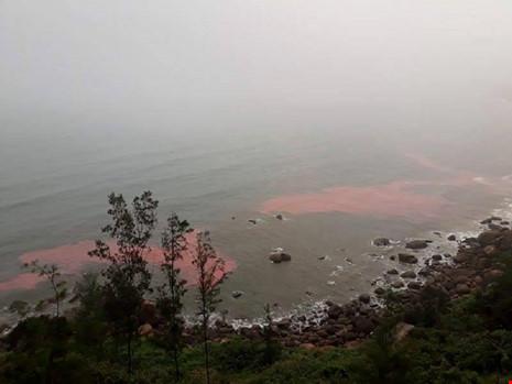 Dải nước màu đỏ ở Lăng Cô là do tảo biển